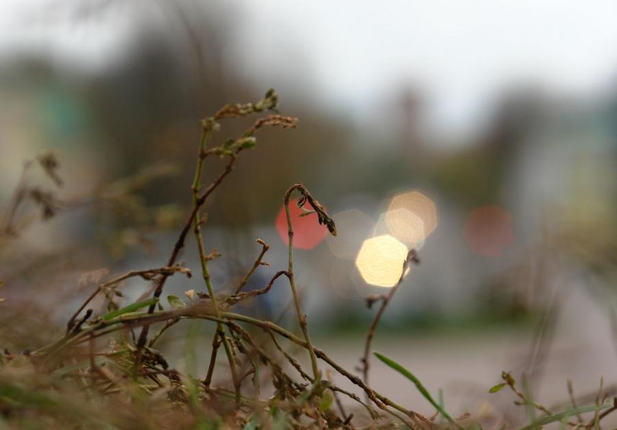 Городские светлячки.