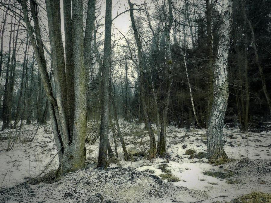 Мартовским вечером в лесу