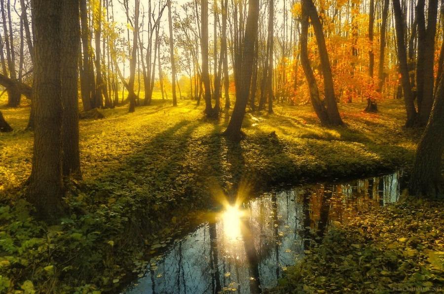 Осеннее солнце в ручье...