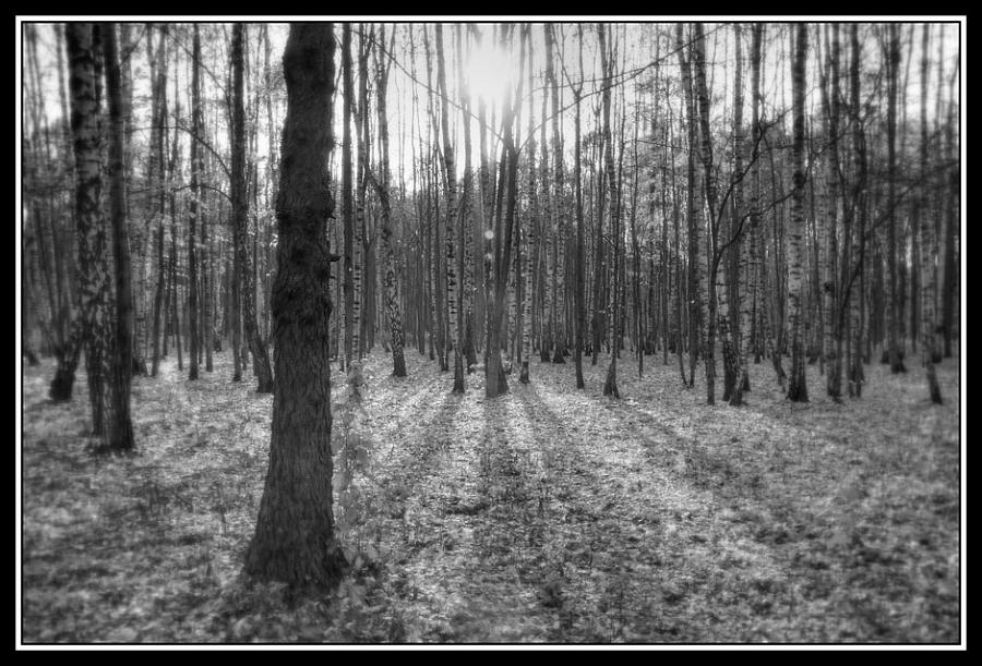 Лесов таинственная сень печальным шумом