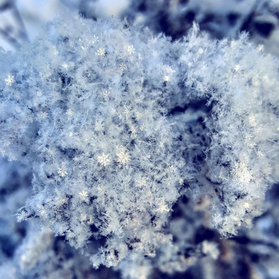 Снежинковая семейка