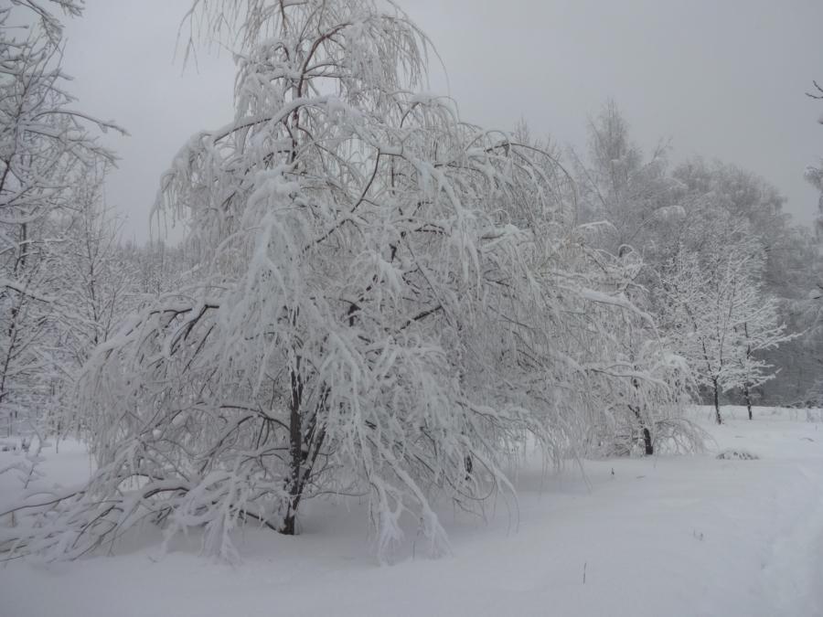 Сегодняшний снегопад