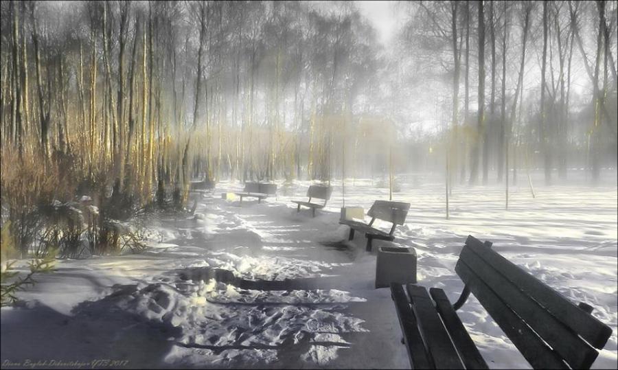 Зимнее утро в парке
