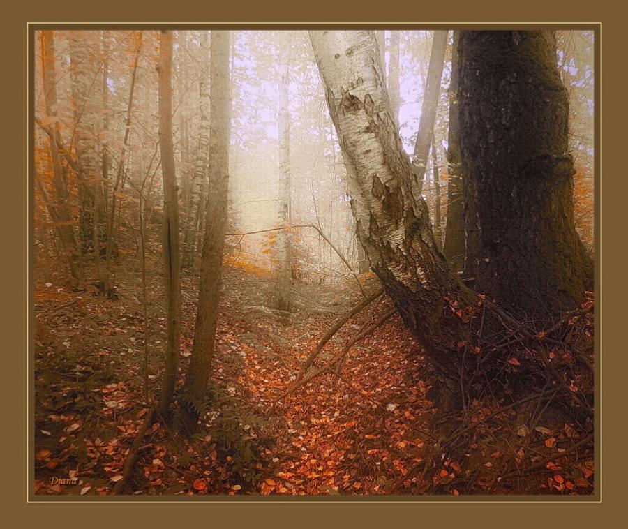 Осенний овражек