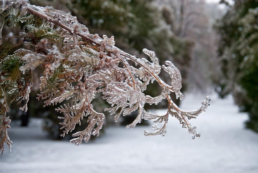 Ледяные узоры