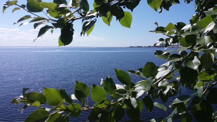 Лето на заливе.
