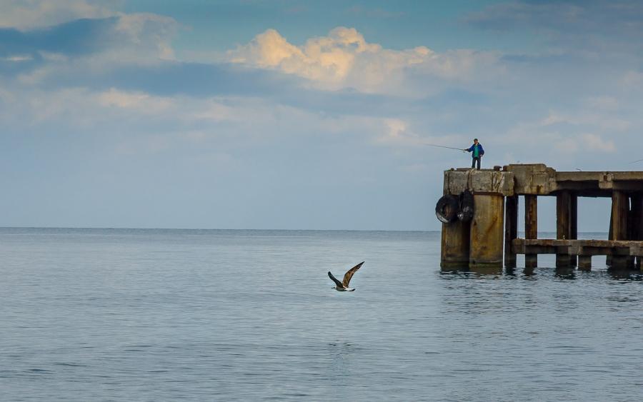 Рыбак и чайка