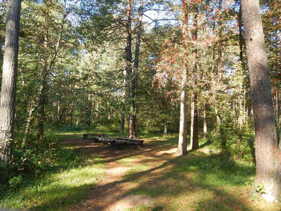 Осенний лесной пейзаж.