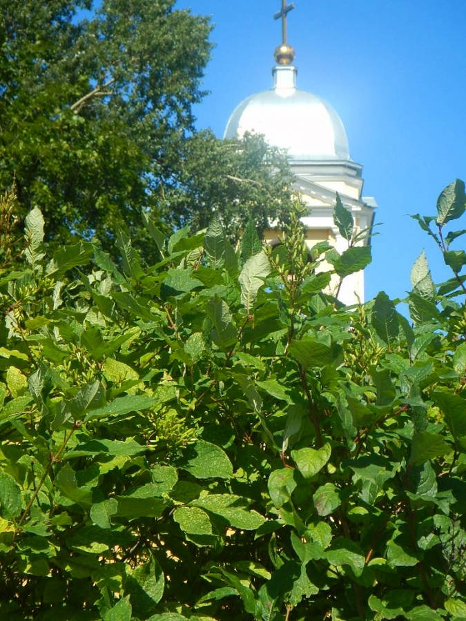 В зелени уходящего лета!