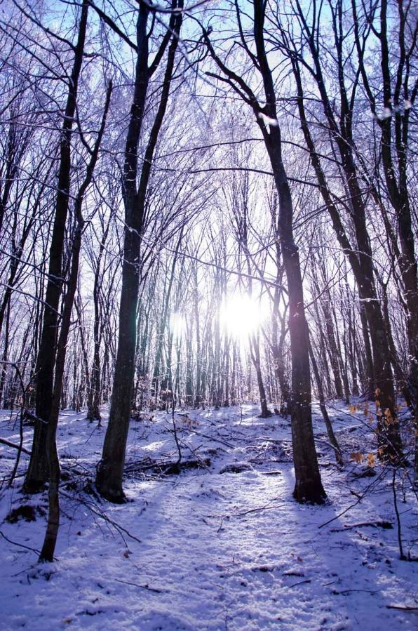 ультрамариновый лес