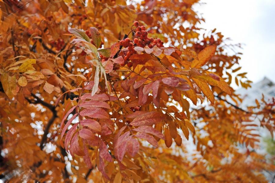 Осень.........