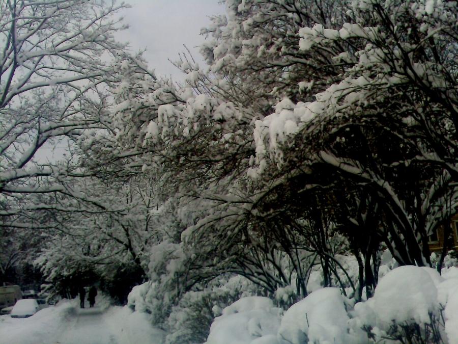 Зима прекрасна даже в городе