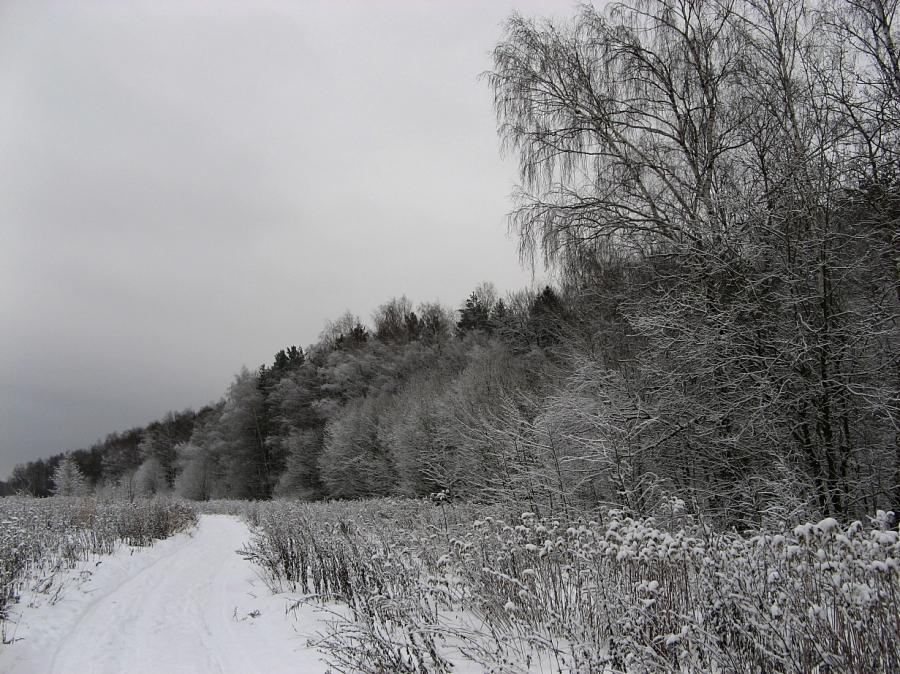 Вдоль серебряного леса