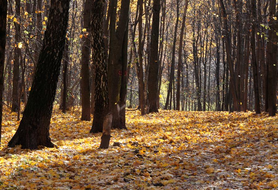 Шорох осенних листьев