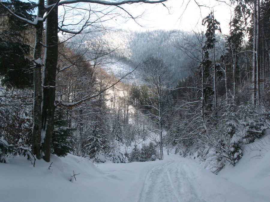 Дорога к горному озеру