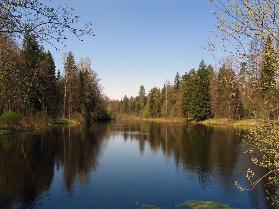 Пруд в Камшиловке