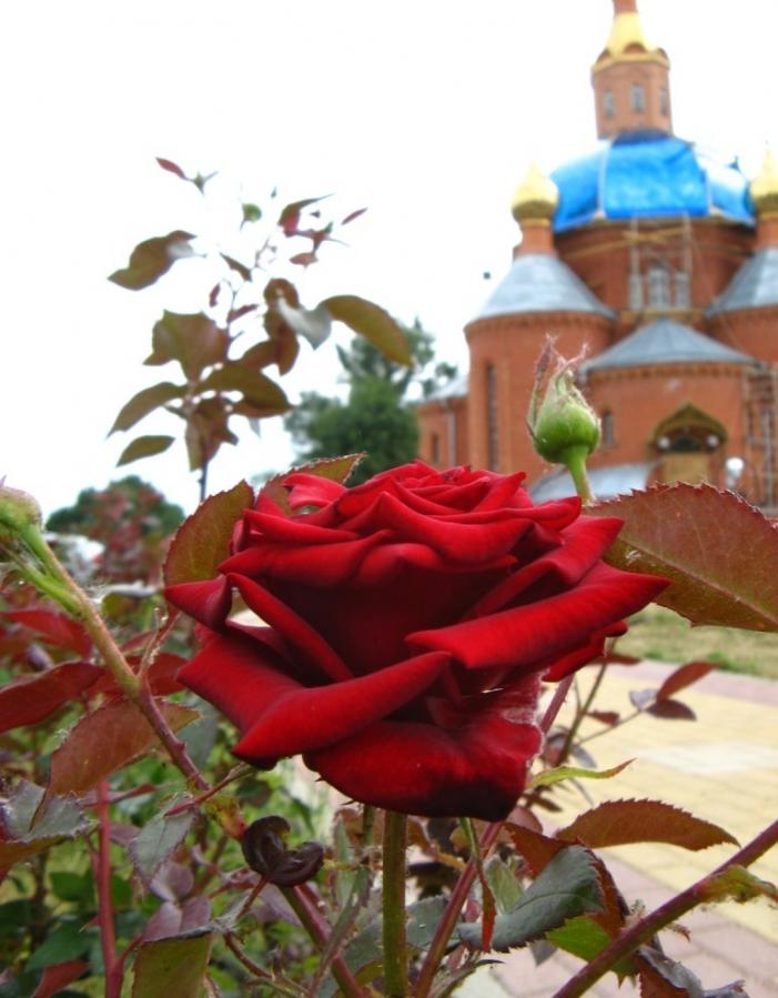Планета роз.