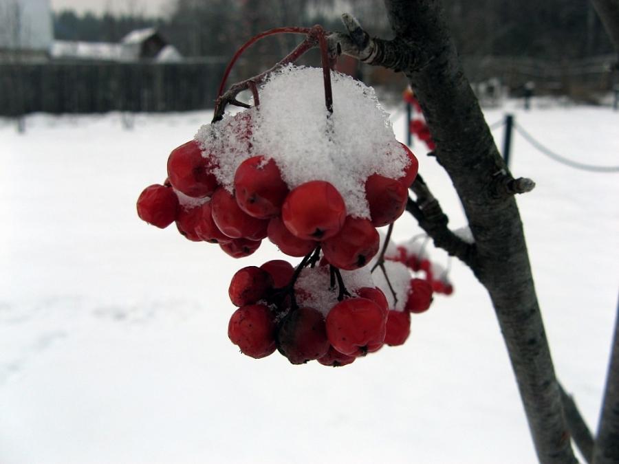 Урожай декабря