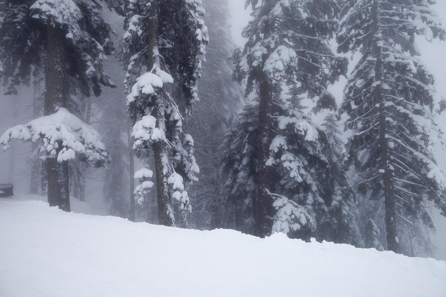 Туманный день в горах