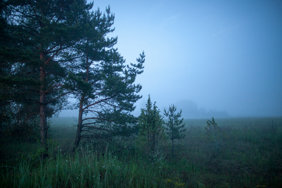 Предрассветный туман