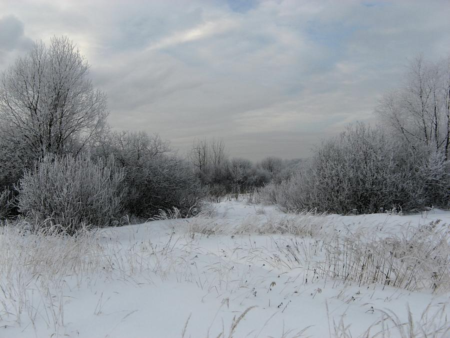 Цвета зимы II