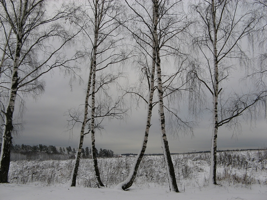 Балет под снегом