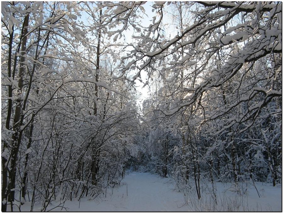 В лесах II