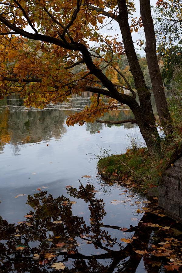 Закружилась листва золотая в розоватой воде на пруду