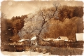 Tree_web90.jpg