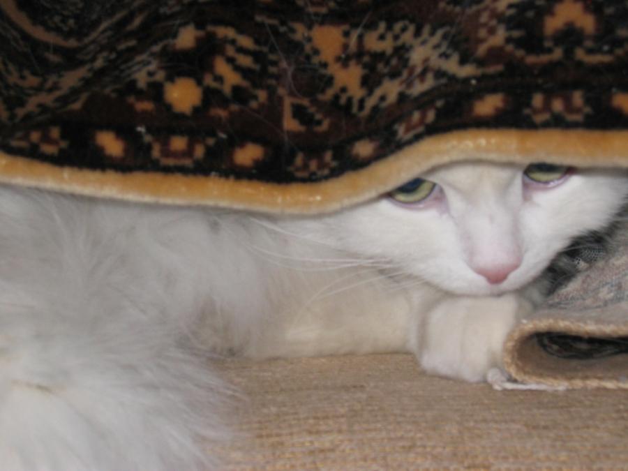 я спрятался!