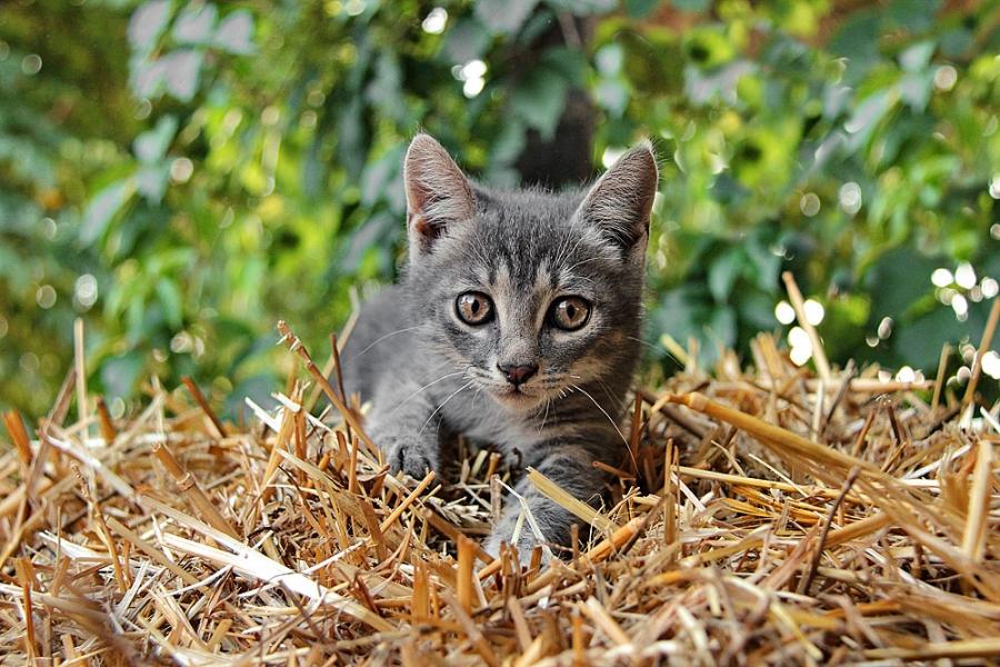 Кот на соломе
