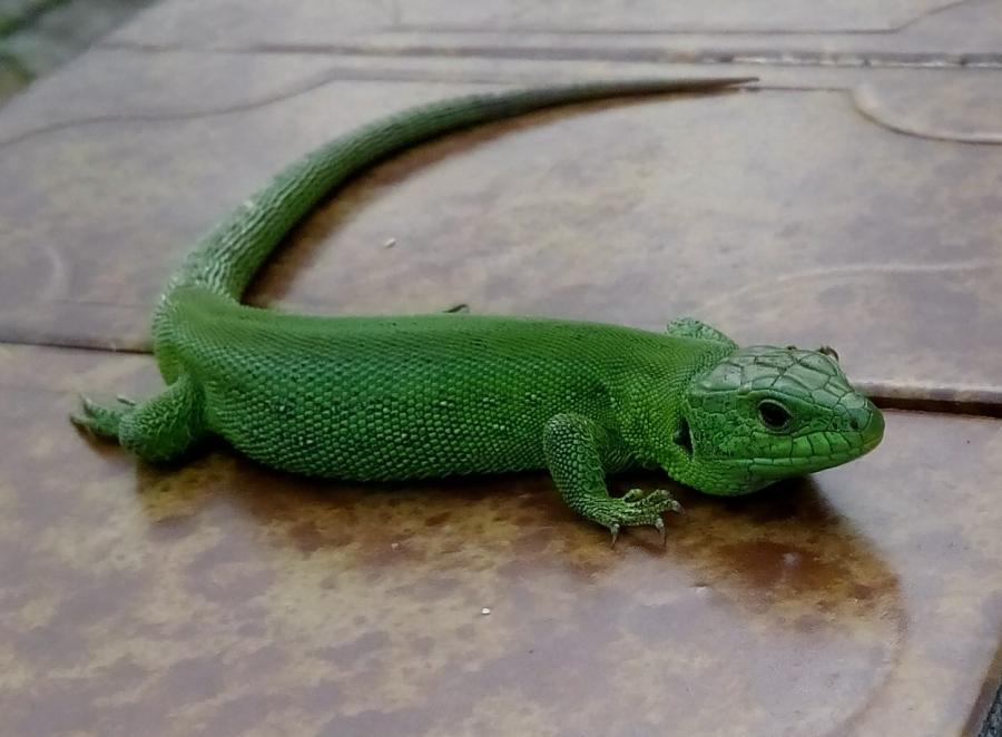 Зеленая красивая
