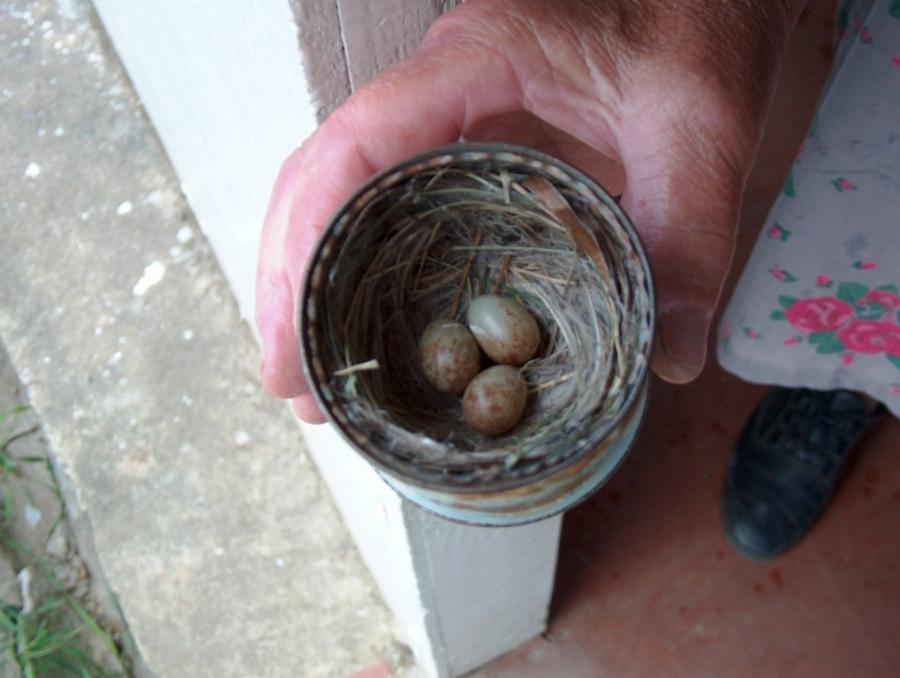 Необычное гнездо
