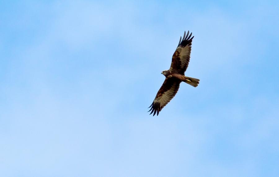 Птица высокого полета.