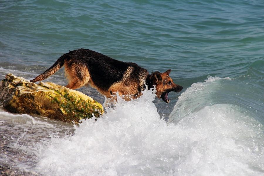 Пес, кусающий море