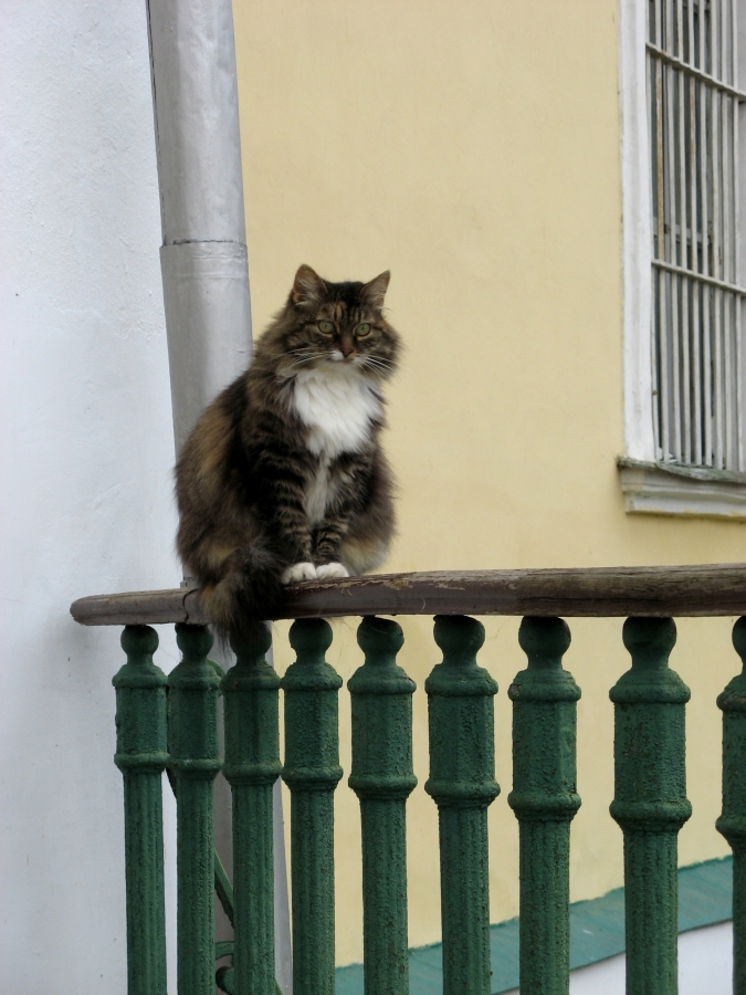 Коты-прихожане I