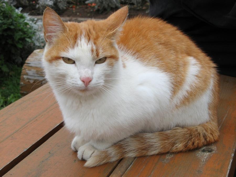 Коты-прихожане II