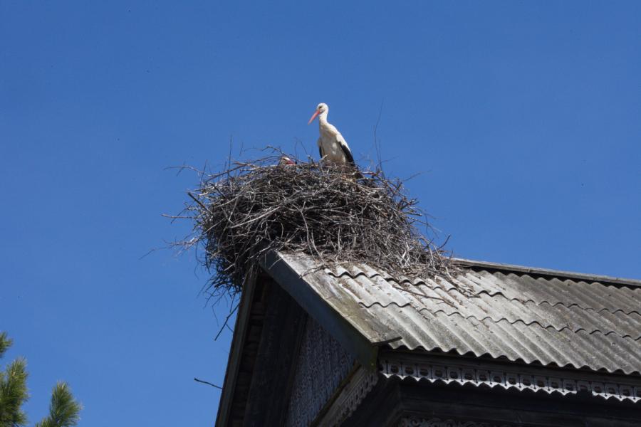 На крыше старого дома