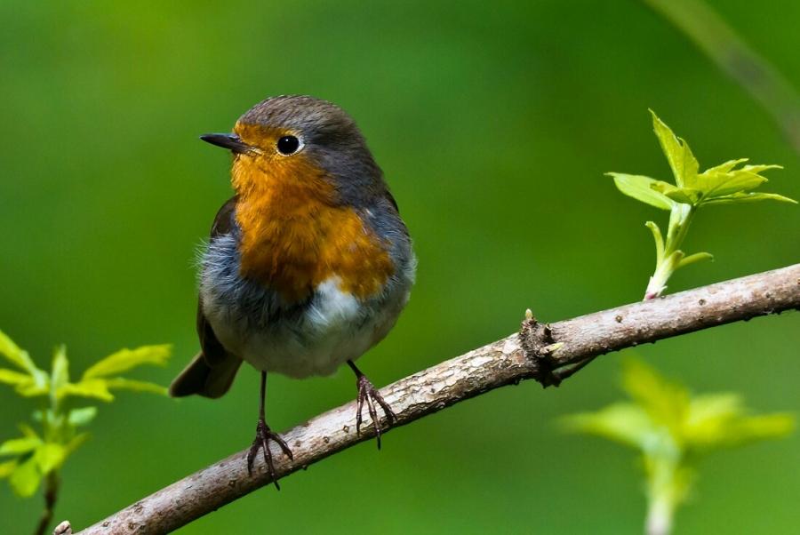 Птичка-невеличка.