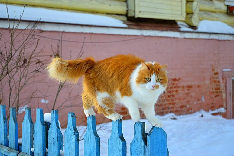 Кошка,которая гуляла сама по себе