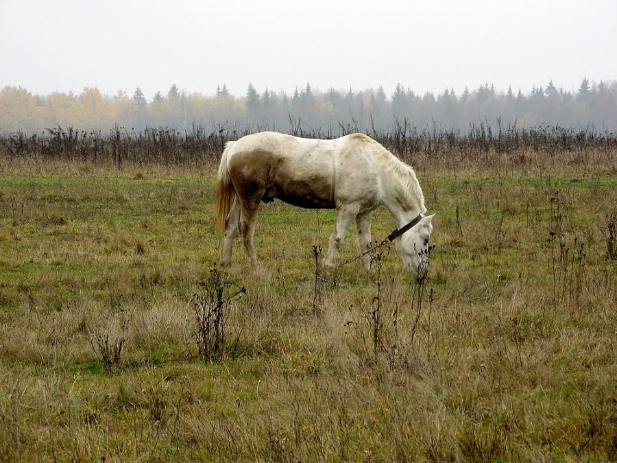 """""""Все мы немножко лошади..."""""""