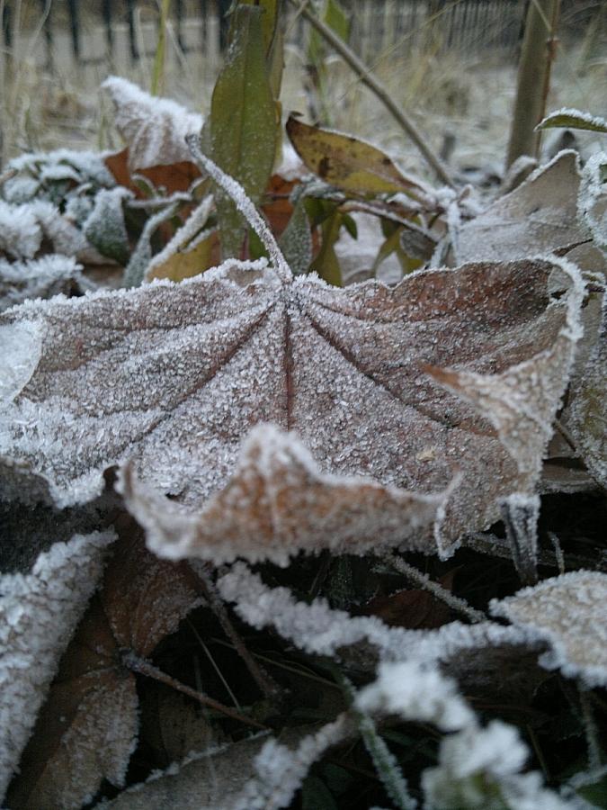 Холодное дыханье ноября