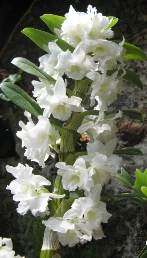 Сад Орхидей.