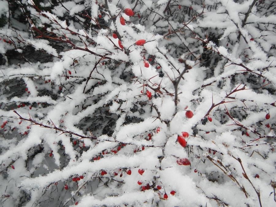 Цвета зимы.