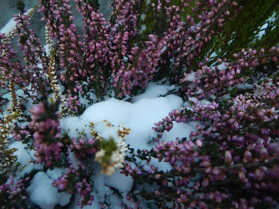 Зимние цветы.