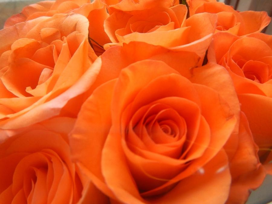 Мир роз.