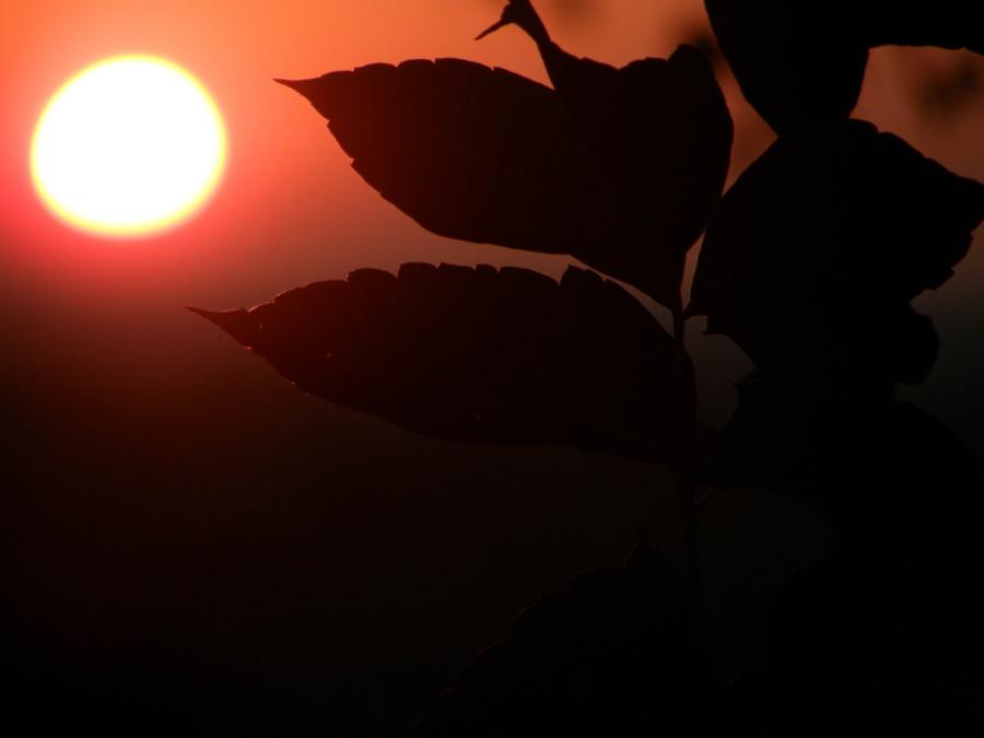 Рассветный лист